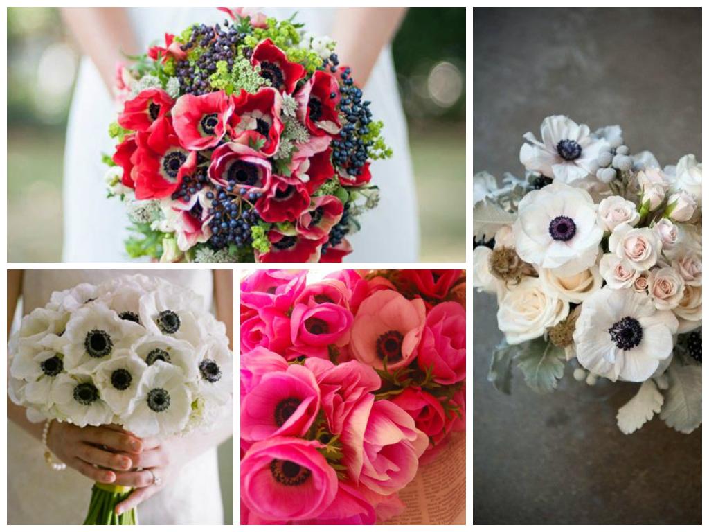 Floral Focus: Anenomes